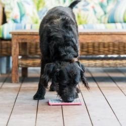 Lickimat Tuff Playdate - tapis de léchage à remplir de nourriture pour chien ou chat conçus pour les aider, les occuper.